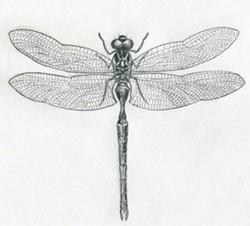 bd30316a_dragonfly-drawings11.jpg