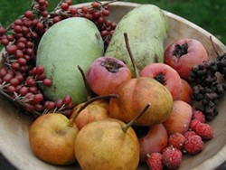 e1a3975c_autumn_s_uncommon_fruits.jpg