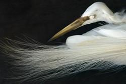 8b9394d1_art_that_nature_makes-bird_banner_1500.jpeg
