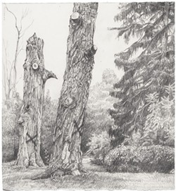 3c437d5d_talluto_two_trees_cutting_8.5x9.jpg