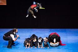 2c430fde_stunt_dog_experience_3.jpg