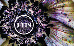053a77e2_bloom_banner.png