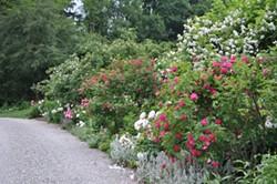 Uploaded by gardencon