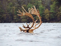 And in the distance the passing of a great black caribou - Uploaded by pbaristudio