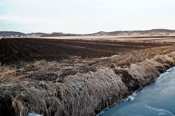 Warwick Valley's famed black dirt. - DAVID MORRIS CUNNINGHAM