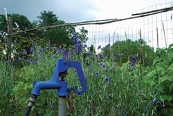 Water is the best fertilizer. - LARRY DECKER