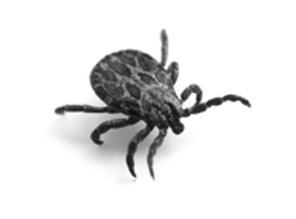 buzz--wildlife.jpg