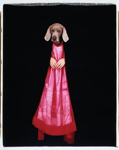 """WILLIAM WEGMAN, LITTLE RED, POLAROID, 24"""" x 20"""", 1999"""