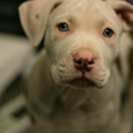15 Adorable Pups Currently Up for Adoption at the Cleveland APL