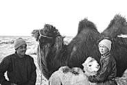 A portrait of Mongol desert life culminates in a moment - of wonder.