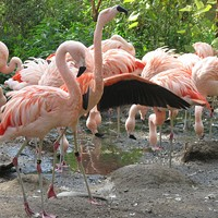 11 Awesome Northeast Ohio Distractions And aren't these flamingos at the zoo just absolutely dashing? ERIK DROST/FLICKR CREATIVE COMMONS
