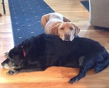 LELRR - Animal Rescue Seminar