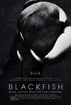 Blackfish, a documentary about Tilikum, a killer whale that attacks its trainer, opens with the gripping 911 call that was placed after the incident at Sea World in Orlando in 2010. That sets the tone for this terrific film, which is showing at the Cedar Lee Theatre. The movie examines the world of training the huge creatures. The filmmakers take us back to Puget Sound in 1970 where Tilikum was initially captured. The whale is transported to British Columbia where trainers abuse it and keep it confined in a small dark pool at night. We learn that if anyone is to blame for the attacks, it's Sea World. But Sea World repeatedly declined to be interviewed for the film, so we never hear its side of the story. Because the film so carefully documents its defense of the numerous lawsuits filed against it, the lack of a first-hand testimony from a Sea World rep doesn't diminish the movie in any way. It's a terrific documentary. (Jeff Niesel)
