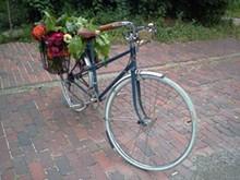 bike_jpg-magnum.jpg