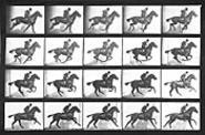 Four off the floor: Muybridge's images of trotting - horses revealed their peculiar stride.
