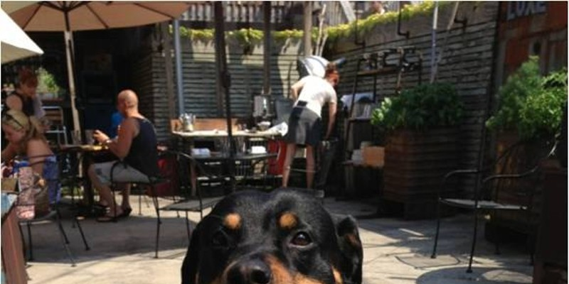 The Top 10 Dog Friendly Patios in Cleveland LUXE- 6605 Detroit Ave216-920-0600; luxecleveland.com Photo Courtesy of LUXE, Facebook