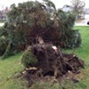 @manu_kheira @arun_kheira #breakingdowntrees #timmmber #clevelandproblems