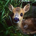 Deer Crashes Through Window, Wrecks Havoc Inside Condo in Avon Lake