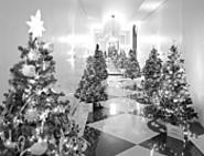 O Christmas trees! O Christmas trees! You dazzle us - with your mega-wattage splendor! (Tuesday)
