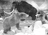 Pleistocene Epoch alert! It's glacial madness at the - West Woods Nature Center's Engage the Ice Age!