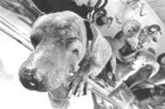 """Rip van Poochie: Susie the pit bull has been - """"sleeping"""" for 27 years. - WALTER  NOVAK"""