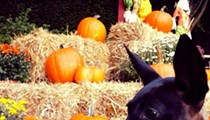 The Complete List of Not-to-be-Missed Northeast Ohio Fall Festivals