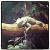 The true Winking Lizard. #clevelandbeerweek