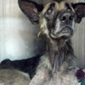 This Ohio Dog Was Chained to a Tree for Four Straight Years