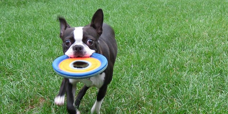 10 Fun Summer Things to do With Your Dog in Cleveland Toss a frisbee or tennis ball for your dog in this spacious, fenced-in park and before you know it, there'll be a whole pack of dogs going after it. It's also a great place to mingle with other dog owners. Photo Courtesy of anneheathen, Flickr Creative Commons