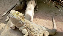 27 Reptiles Found Abandoned, Emaciated in Richland County