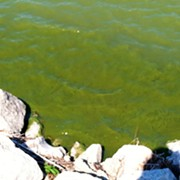 Health Advisory in Place for Toledo's Maumee River as Algae Bloom Problem Grows Worse