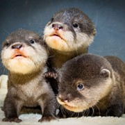 These Adorable Cleveland Metroparks Zoo Otter Pups Now Have Names