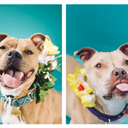 Eat Ice Cream and Fall in Love with Adoptable City Dogs at Tremont Scoops This Sunday