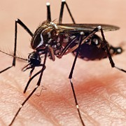 Medical Examiners Confirm Second Case of West Nile Virus in Cuyahoga County