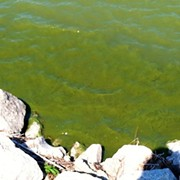 2019 Lake Erie Algal Bloom Forecast: Pretty Bad!