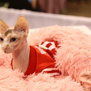 The International Cat Show Returns to Cleveland's I-X Center This October