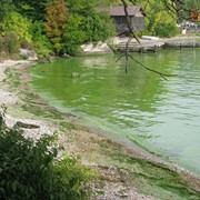 Toxic Algae a Labor Day Concern on Lake Erie