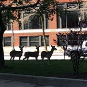 Three Deer Enjoyed a Mostly Empty Downtown Cleveland This Weekend