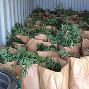 Man Arrested After More Than 350 Weed Plants Found During Raid