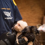 12 Ohio Puppy Mills Rank Among the Worst in U.S.
