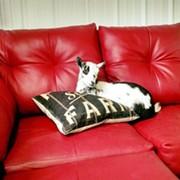 'Goat Yoga' Comes to Lorain Yoga Studio This Weekend