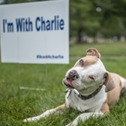 Charlie on Trial: Lakewood Residents Protest City's Pit Bull Ban