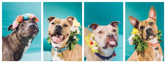 CITY DOGS | A HOPEFUL TAIL PHOTOGRAPHY