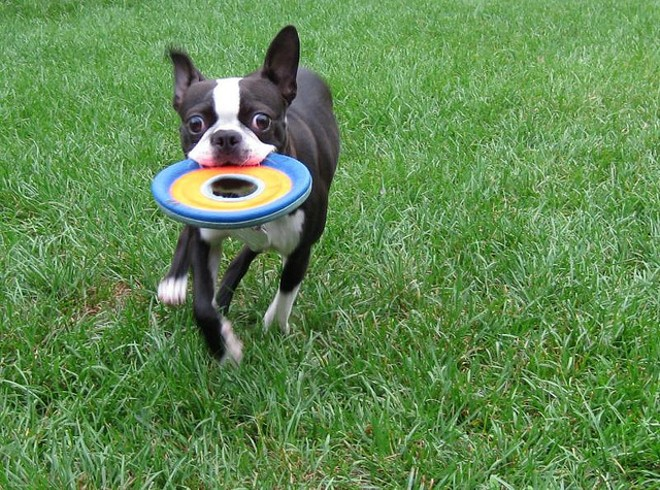 Toss a frisbee or tennis ball for your dog in this spacious, fenced-in park and before you know it, there'll be a whole pack of dogs going after it. It's also a great place to mingle with other dog owners. - PHOTO COURTESY OF ANNEHEATHEN, FLICKR CREATIVE COMMONS
