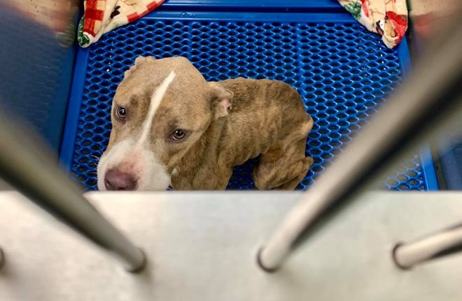 Cleveland Dog Left 'Starved and Dumped' on East Side Headed to Foster Home After Speedy Recovery