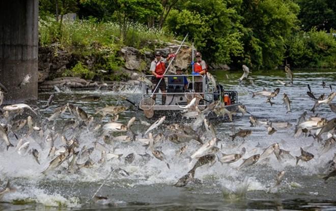 RYAN HAGERTY/U.S. FISH AND WILDLIFE SERVICE
