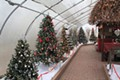 Christmas at Beech Creek Gardens