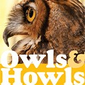 Owls & Howls