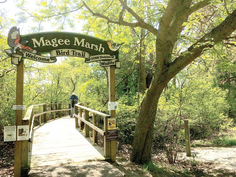 The boardwalk at Magee Marsh has a mecca-ish quality in spring. - PHOTO BY ERIC SANDY
