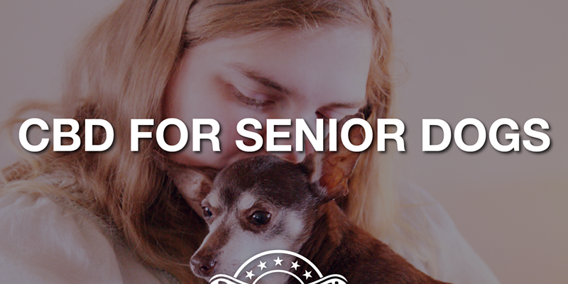 CBD for Senior Canines